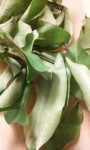 soursop leaves tea benefits