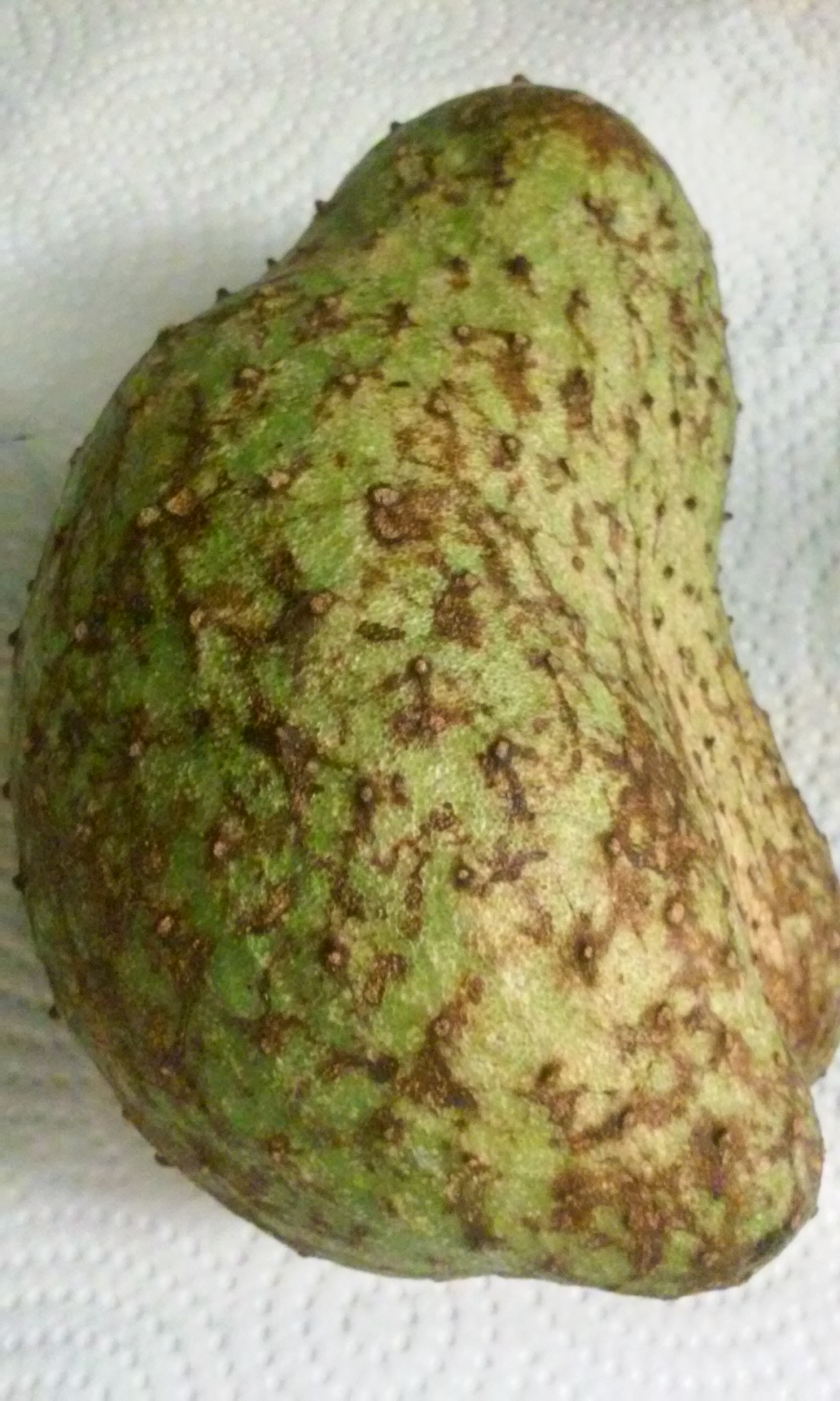 Graviola Review: My Experience With Soursop Leaves Tea – 1Stop