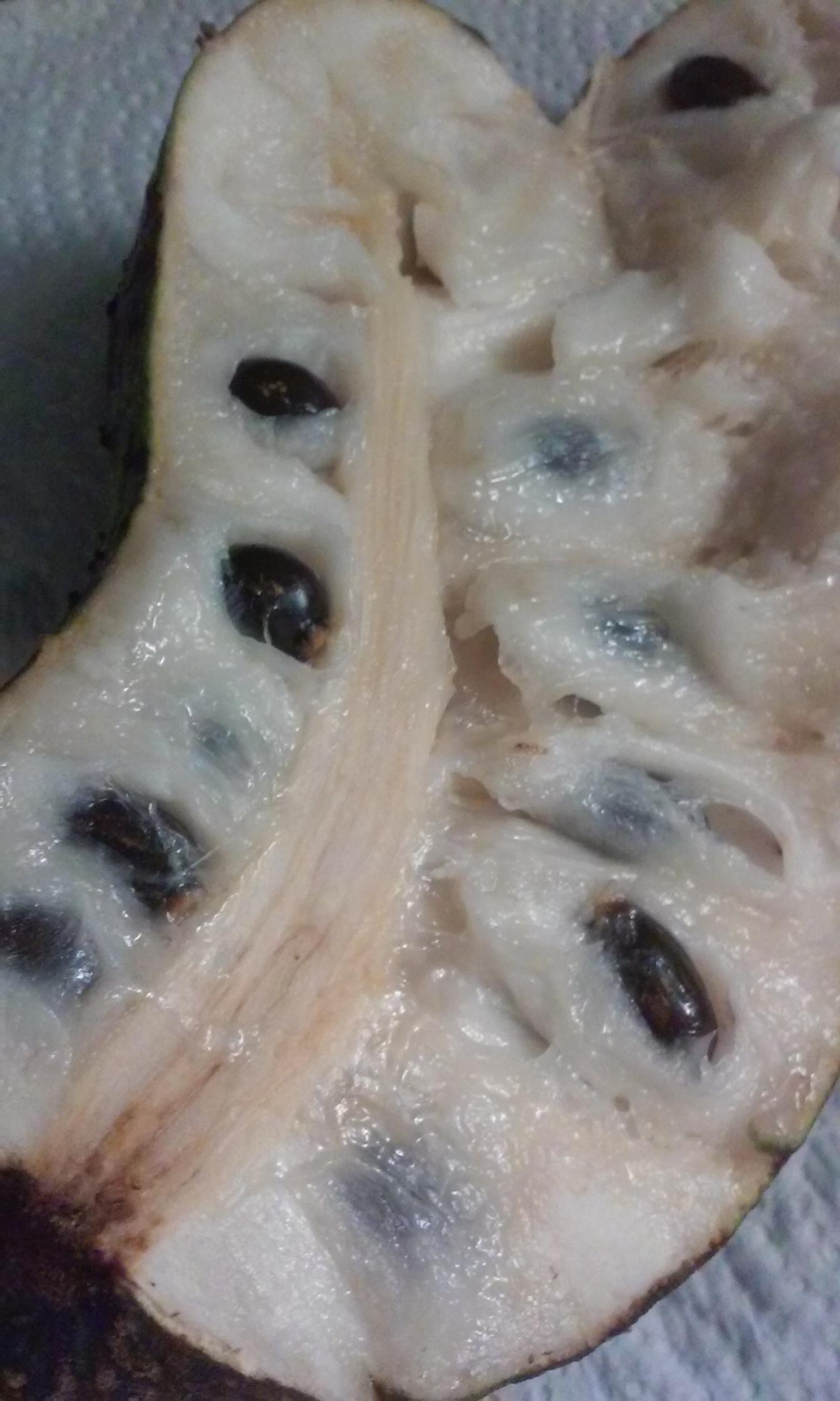 natural sleep aid soursop leaves – 1Stop Natural Home Remedies